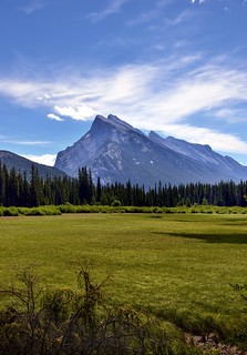 Mount Rundle and a Grassy Meadow (Portrait View)