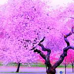 Spring in Life 2 2015