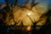 Sunlight Moon_DSC3772