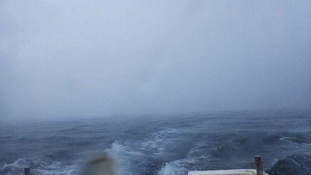 何にも見えない!大雨だよ~