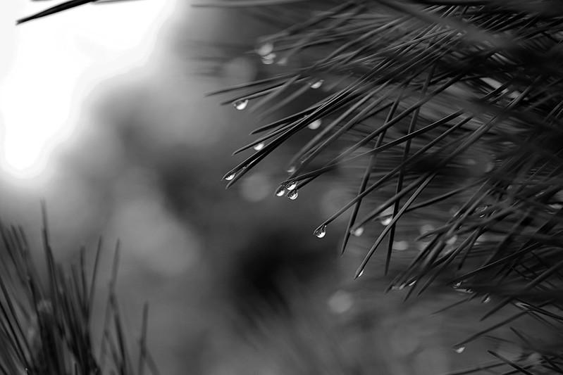 2015 5 24 - Everlasting Rain - Topaz Restyle Dove - Friar Gray - 9S3A5256