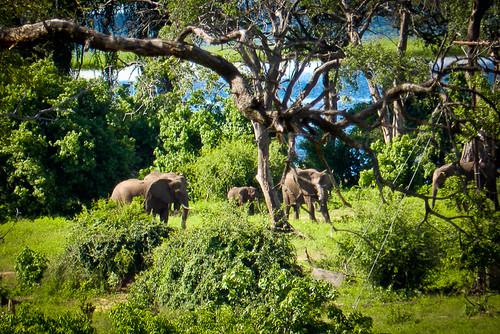 ¿Cuántos elefantes caben en un VW?