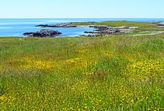 NS-01528 - Sea of Yellow