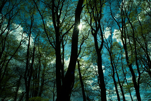 20150426-04_Cawston Bluebell Woods - Trees