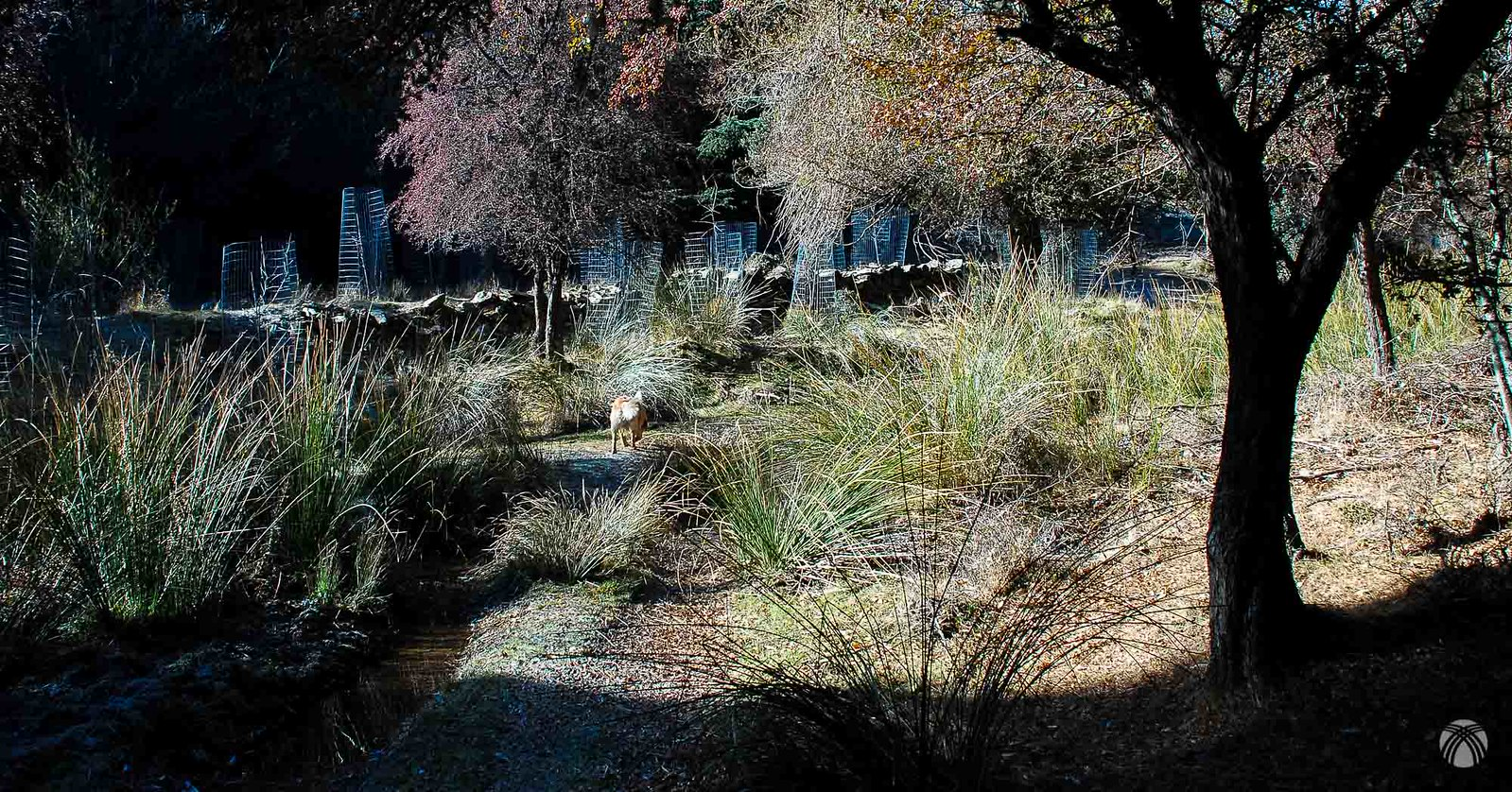 Plantones protegidos por mallas cilíndricas