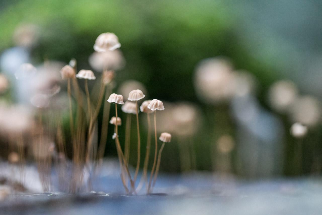 Todo tipo de hongos se pueden observar recorriendo los senderos y prestando atención. (Tetsu Espósito)