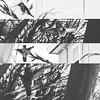 #Hummingbird after Sunday #brunch #webrunchhard #bw #oakland #moon #latergram #inkwell #layout #instabird #instahummingbird by allaboutgeorge