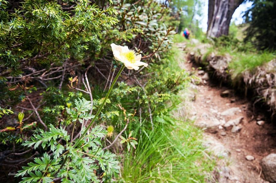 Pinzolo, Trentino, Trentino-Alto Adige, Italy, 0.013 sec (1/80), f/8.0, 2016:06:29 10:37:27+00:00, 16 mm, 10.0-20.0 mm f/4.0-5.6