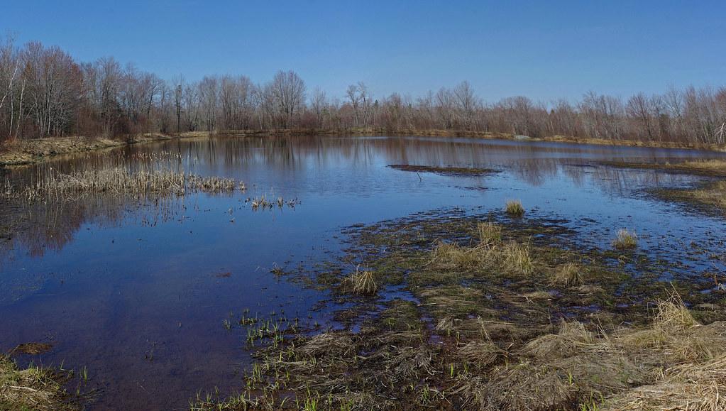 Pine Pond pano 5-2-15