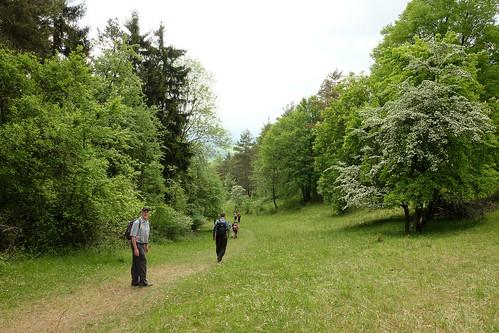 2015-05-24 Weimar Goethewanderweg 0130.jpg