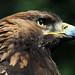 Stone Eagle by neya25