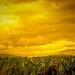 Toda la Gloria del Mundo cabe en un grano de maíz... por Fonzzi