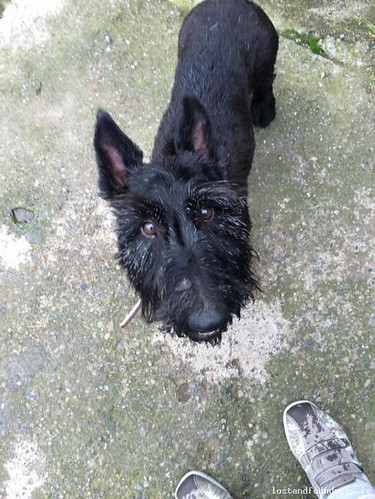 Mon, Aug 22nd, 2016 Found Male Dog - My Garden, Ballylinan, Laois