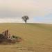 l'albero solitario by rino_savastano