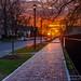 University Ave. Sunset by ransomtech