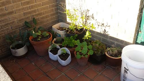 Wee corner garden