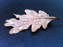 AV-droplets on leaf
