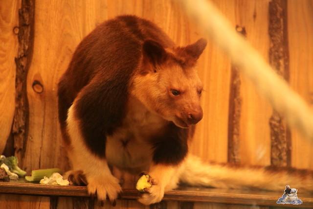 Eisbär Fiete im Zoo Rostock 07.05.2016  0306