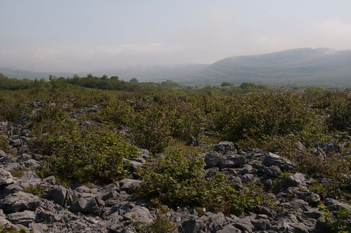 Wilderness Walk in the Burren
