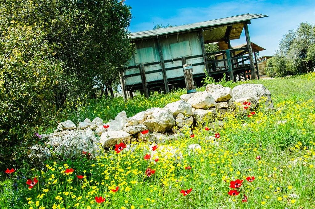 Roe Deer Trail Ajloun Forest Reserve Jordan