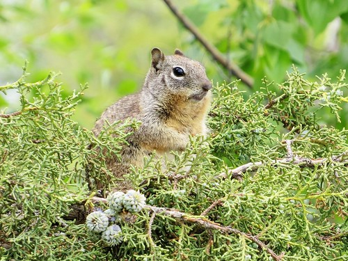 squirrel durangocolorado swa pastorious statewildlifearea