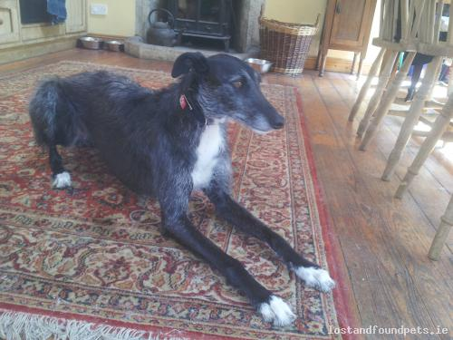 [Reunited] Sun, May 17th, 2015 Found Female Dog - Ardeen Cheshire Home, Shillelagh, Wicklow