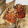 Pine cones #Autumn #kindling