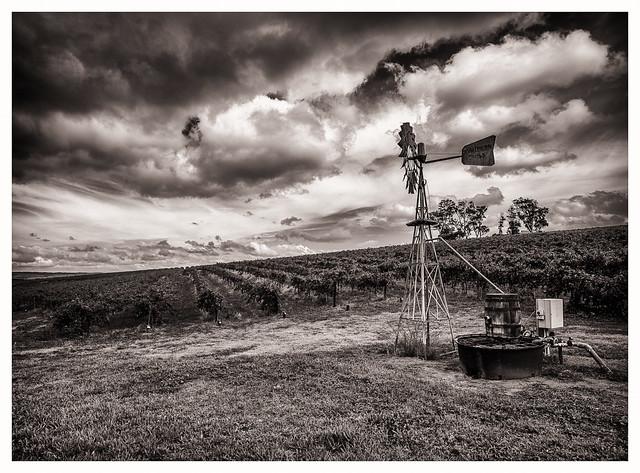 Adelaide Hill Vineyard