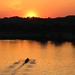 Rowers on the Anacostia at Sunrise by jimhavard