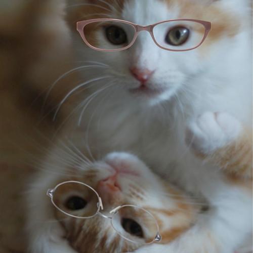 Darling_glasses_9