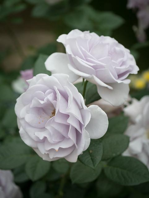 Awaji Floral - Low Key