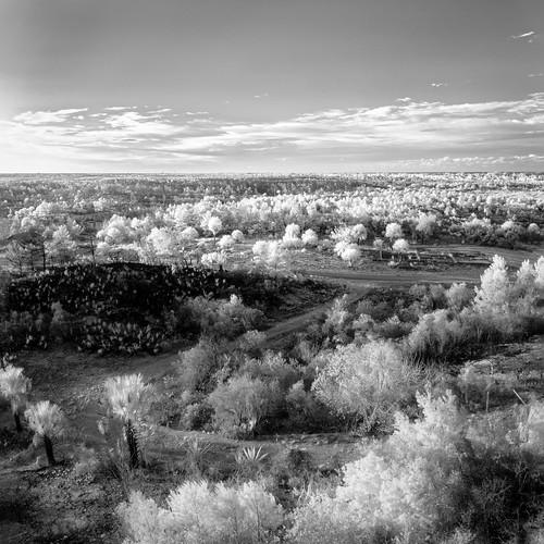sky blackandwhite bw panorama usa cloud plant tree monochrome weather ir florida cloudy clear infrared jupiter jonathandickensonstatepark ©edrosack