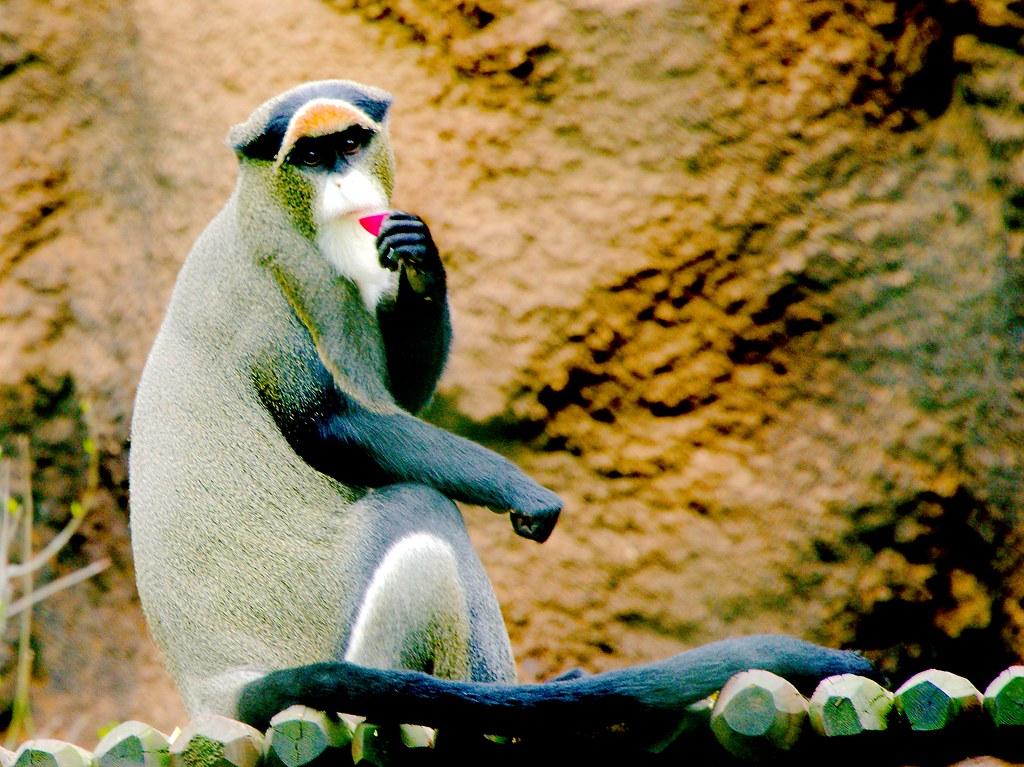 Monkey_3