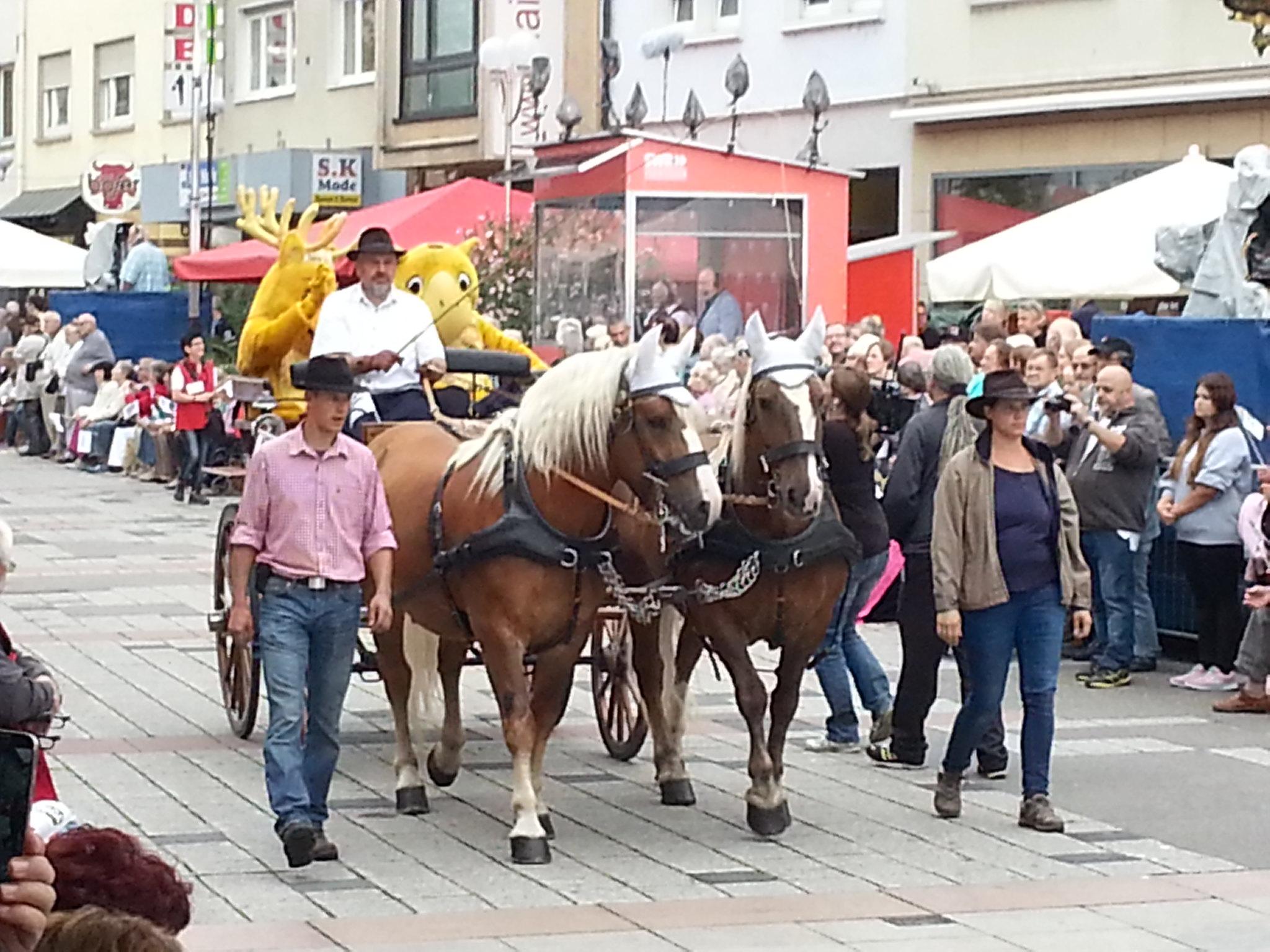 Landesfestumzug Bruchsal 2015 (3)