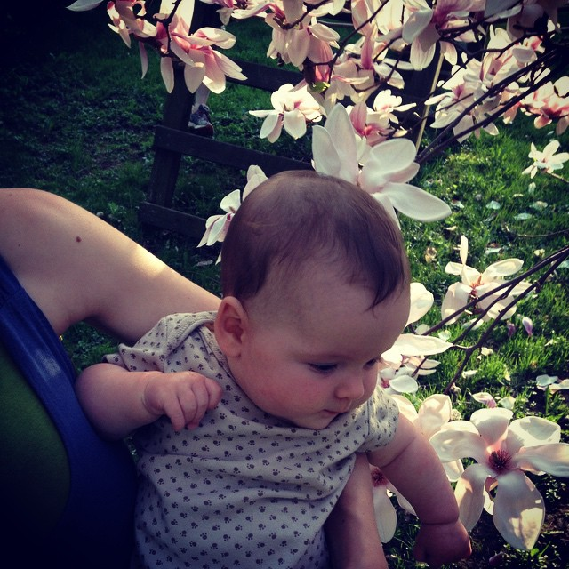 Finn loved the magnolia tree.