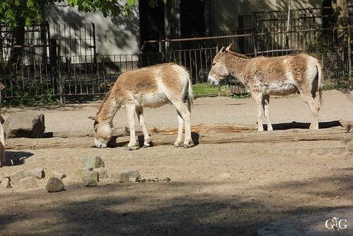 Besuch Zoo Rostock 02.05.2015111