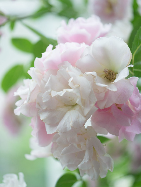 Awaji Floral - High Key