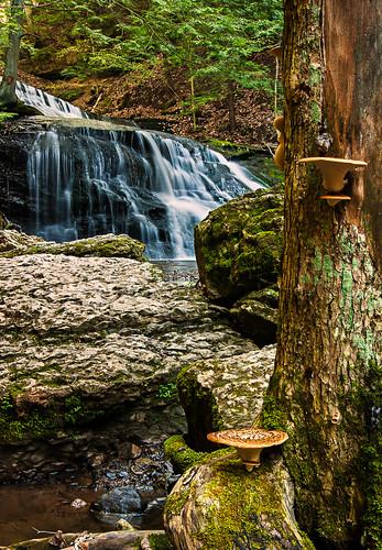 park mushroom forest river waterfall pennsylvania cascade mcconnellsmill hellshollow