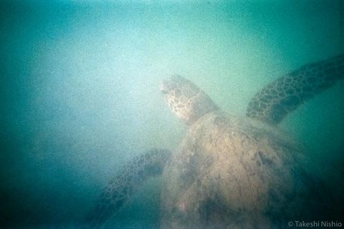 Turtle overtakes me