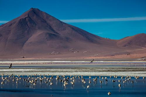 morning mountain lake bird latinamerica southamerica nature landscape volcano flamingo flamingos bolivia amanecer cerro andes laguna altiplano volcan potosi lagunacolorada surlípez