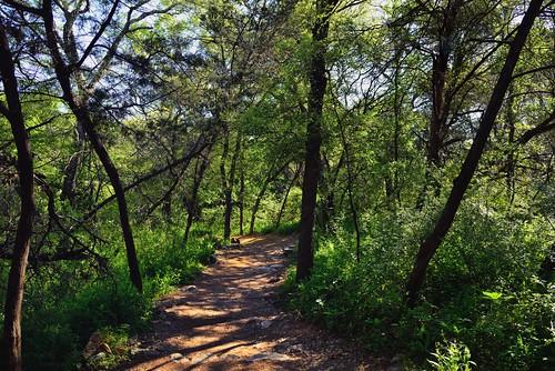 trees nature austin unitedstates tx blueskies hikingtrail naturetrail lookingeast bartoncreekgreenbelt project365 colorefexpro nikond800e capturenx2edited sayinggoodbyetosunshine