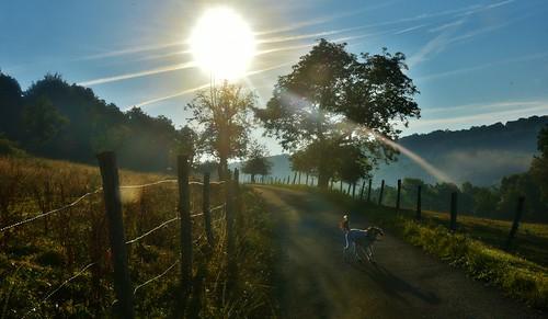chemin leverdesoleil sunrise matin hélèna chien dog contrejourlumière light glay 25 franchecomté arbres trees rayons soleil sun prairie