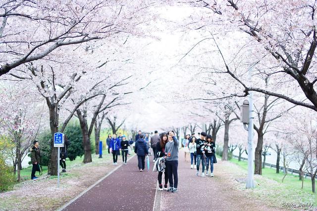 Sakura Selfie