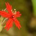 Little flower, big bold color!