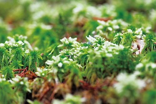苔蘚細看像是微型森林(遠流提供)