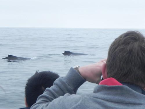 Whales Boston 0515