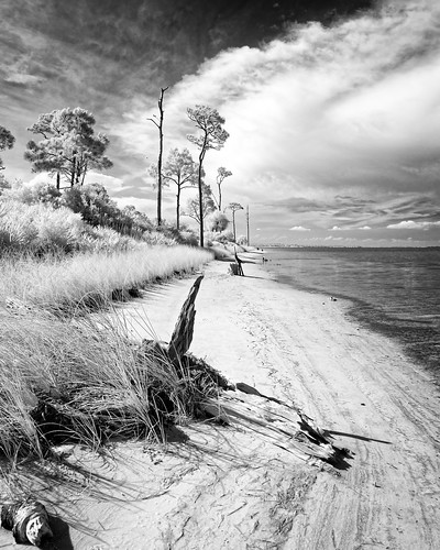 sky blackandwhite bw panorama usa cloud plant tree beach water monochrome grass weather landscape ir florida cloudy driftwood shore infrared portstjoe stjosephpeninsulastatepark ©edrosack
