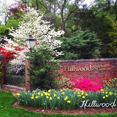 A gorgeous spring morn #nature #garden #gardening #flowers #spring #color #hillwoodestates #museum #pink #hillwood #washingtondc