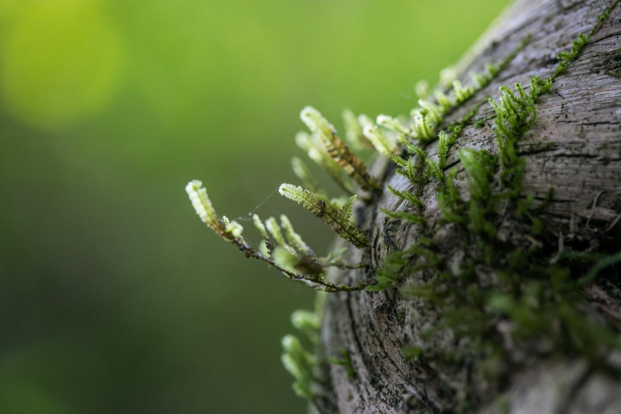 En los bosques húmedos del Mbaracayú crecen todo tipo de plantas, músgos y líquenes son la constante en los troncos de los grandes árboles. (Tetsu Espósito)