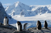 Expeditions-Trekking Antarktische Halbinsel. Pinguine mit Prachtberg Mount Shackleton, 1465 m. Foto: Günther Härter.